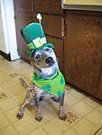 Roo_St_Pat_March_2009.JPG