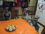Dusty_s_Sixth_Birthday_2009_05.JPG